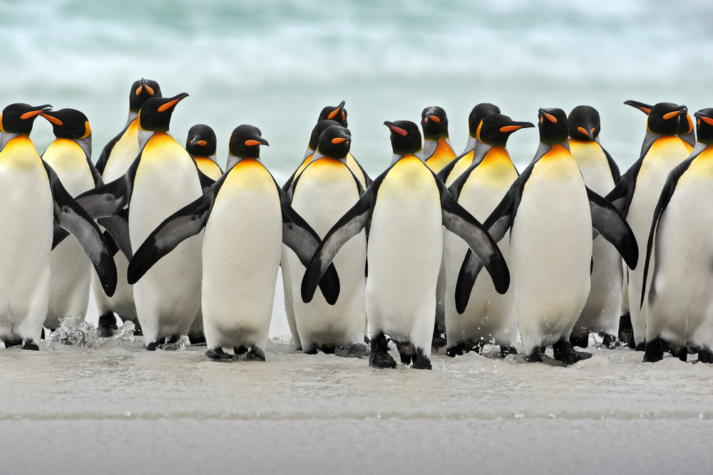 The Penguin Shuffle